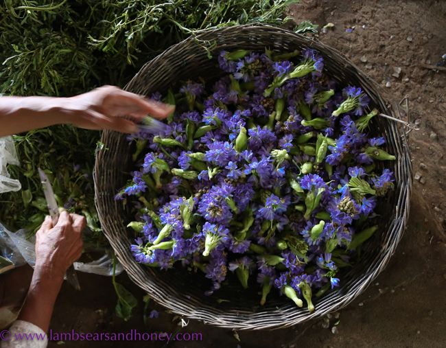 Edible flowers used to color tea. (Photo by Amanda McInery.)