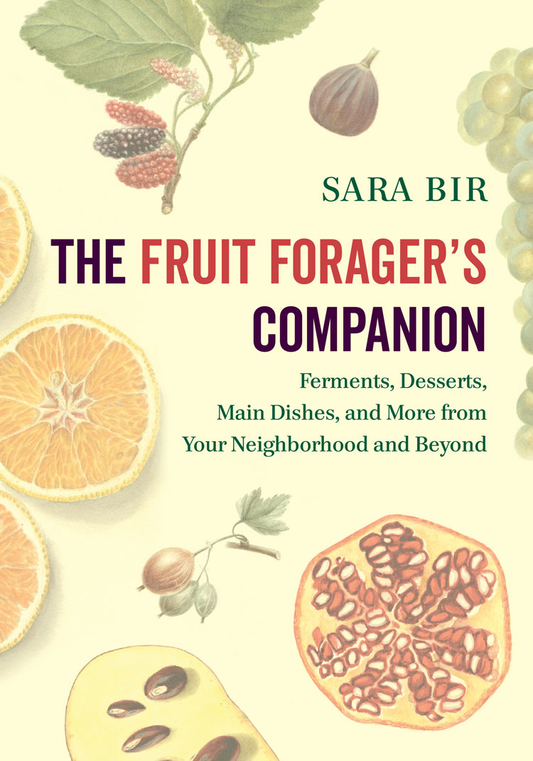 image of Sara Bir book
